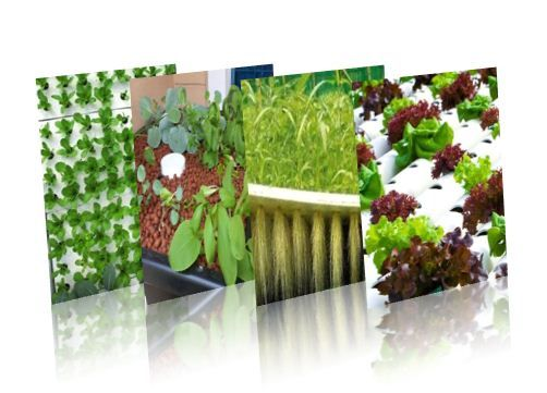 Types Of Aquaponics Systems