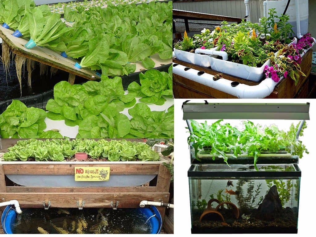The different types of aquaponics systems