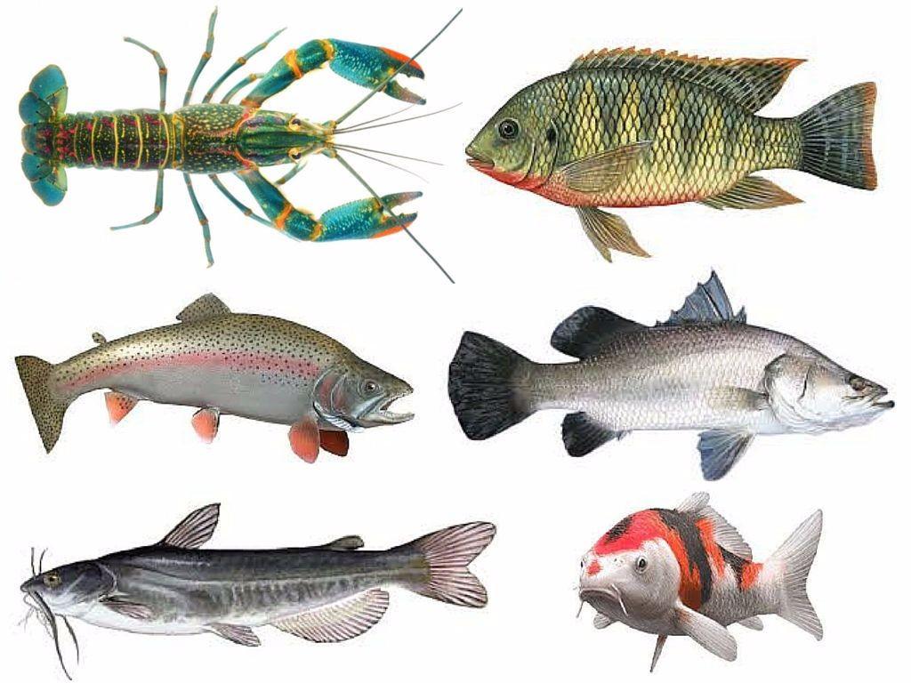 combo-fish-samller