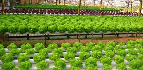 Aquaponics For Developing Countries - Conventional Farming Alternative?