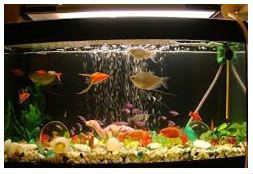 Aquaponics Fish Tank Small