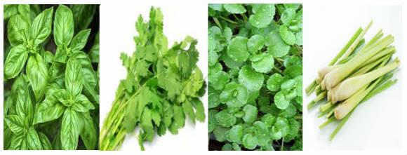 aquaponics herbs