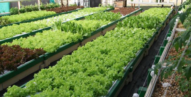Aquaponics Farming