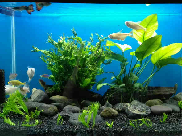 fish aquarium aquaponics system